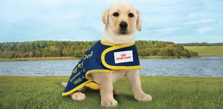 Paws Program Assistance Dogs Australia