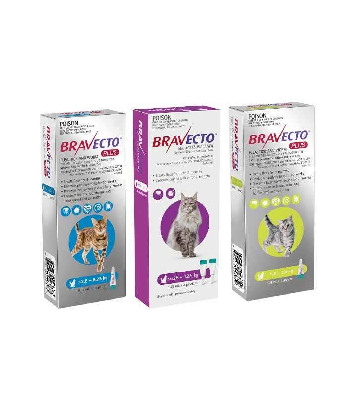 Flea Tick Worm Treatment for cats