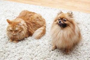 adopt-cat-dog.jpg