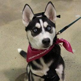 Puppy School | Petbarn