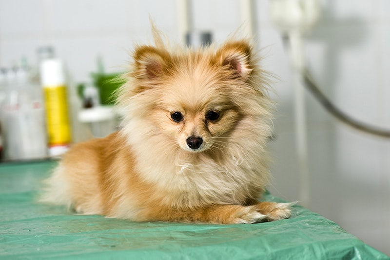 Intestinal Worms In Dogs: What You Need To Know | Petbarn