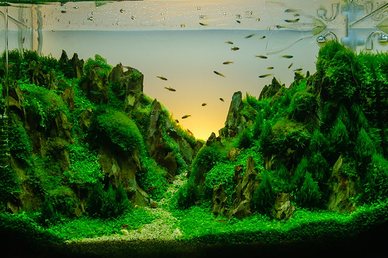 How To Aquascape Your Aquarium | Petbarn