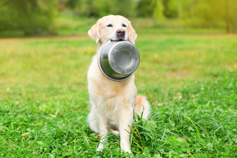 dog-transition-diet-PB066_800x533px