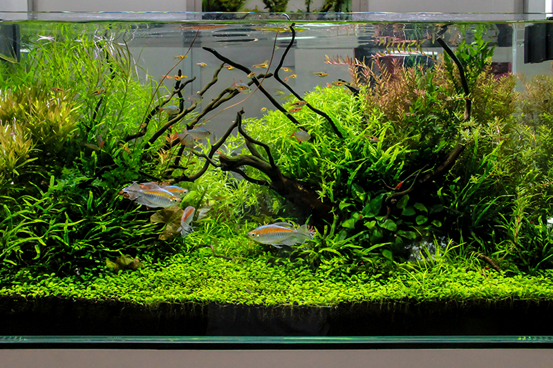 how to set up a tropical fish tank petbarn articles