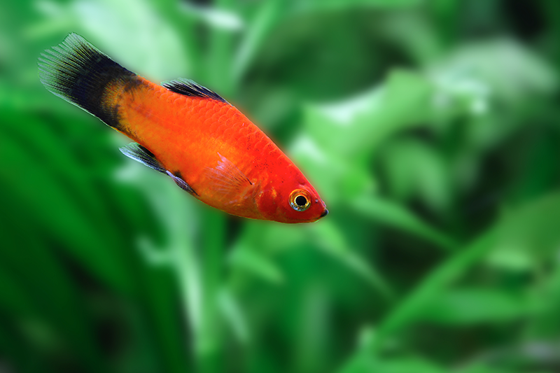 Six Great Types Of Fish To Keep As Pets | Petbarn