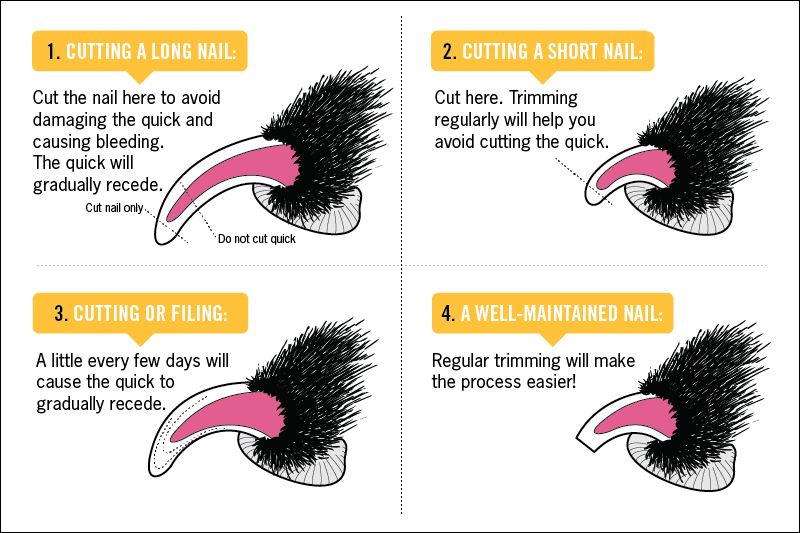How to cut your pet's nails