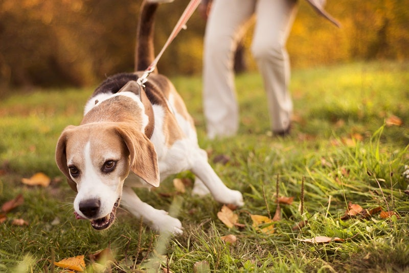 Flea, tick and worm protection for dogs