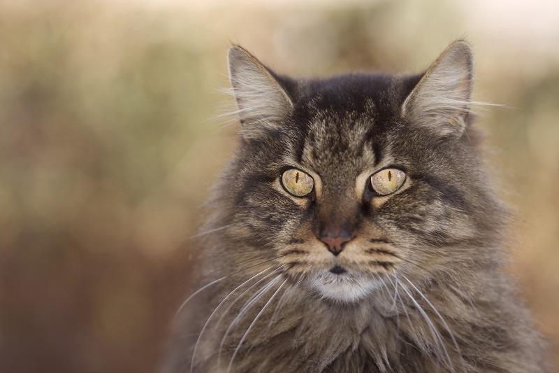 Common senior cat conditions