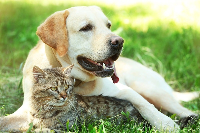 Signs of heat stroke in dogs and cats