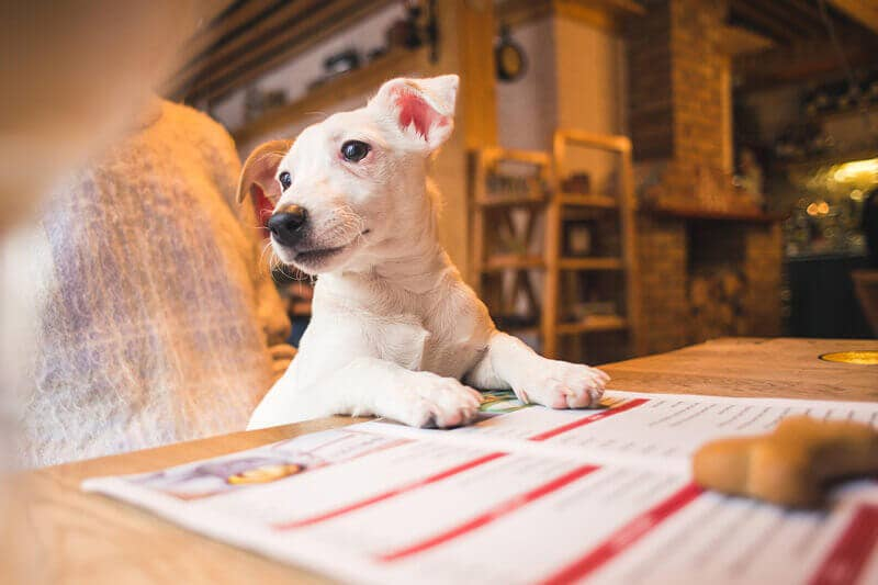 A puppy sits at a table with paperwork