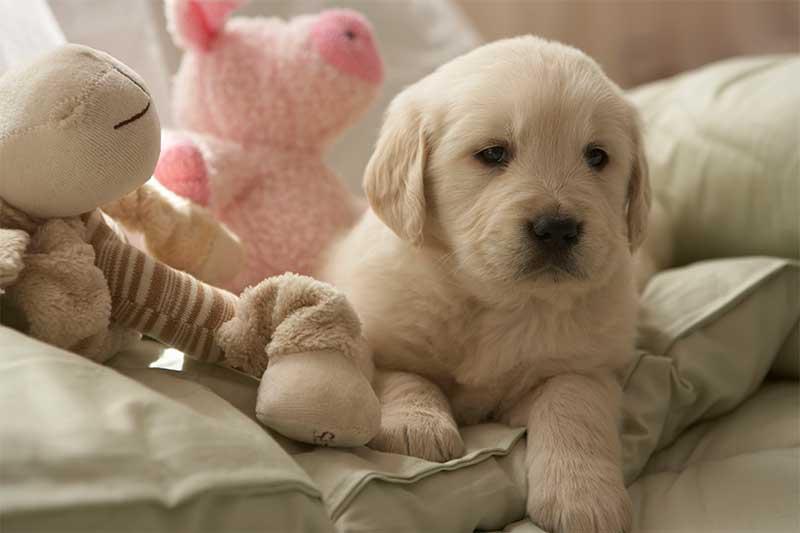 Are puppies safe around babies?
