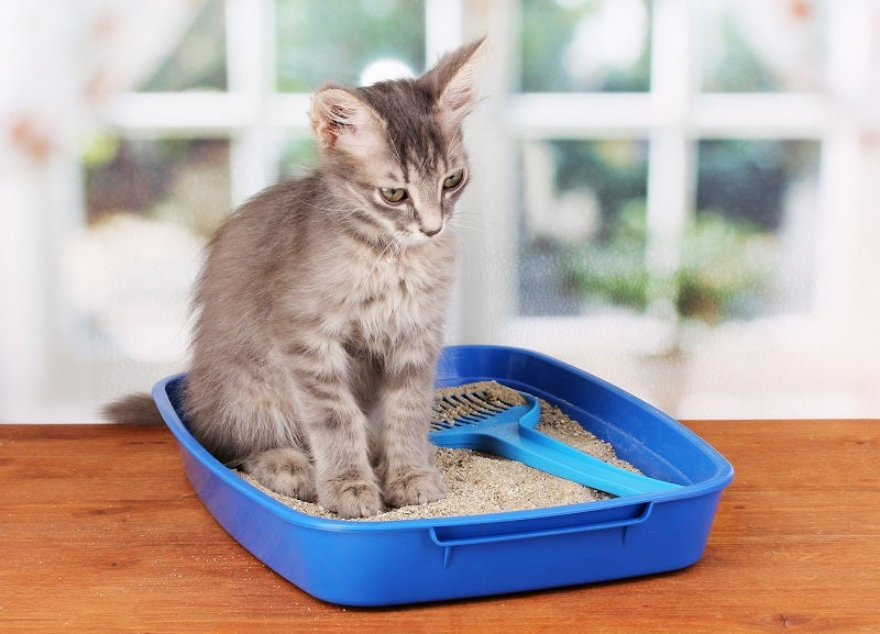 Eco-friendly guide to cat litter
