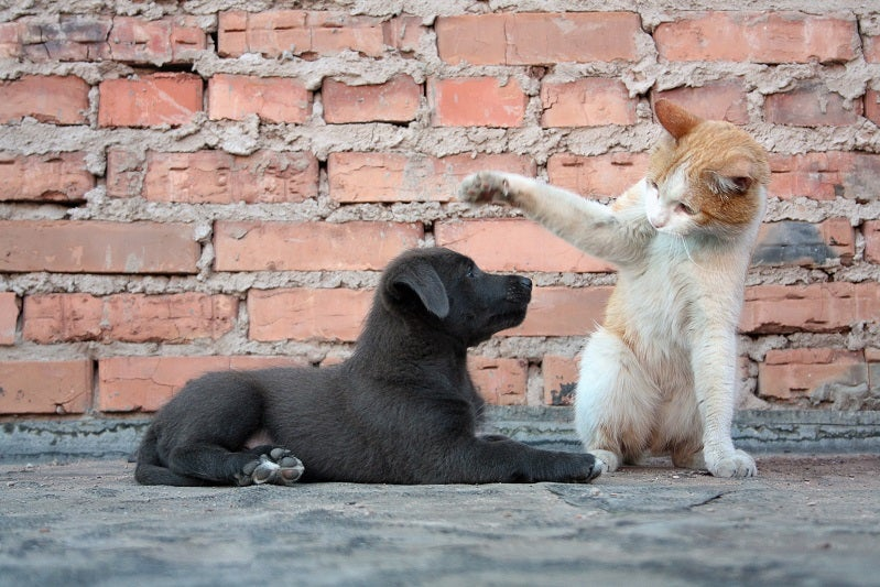 Introducing a puppy to your cat