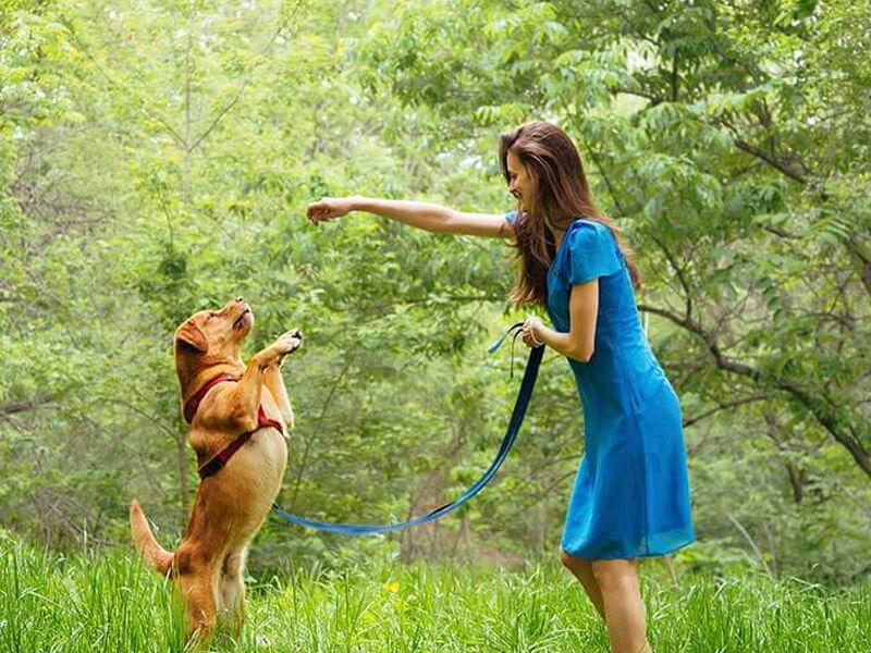 training-my-puppy