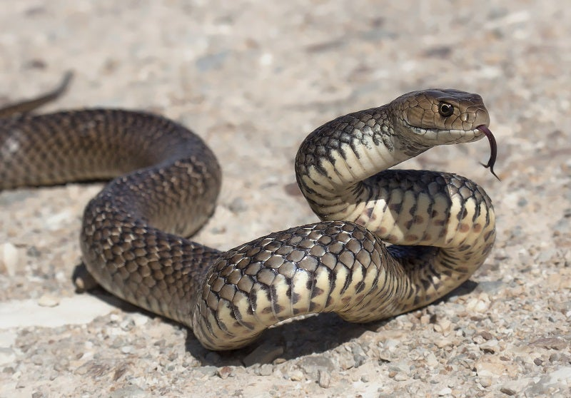 How to protect your pets from snakes