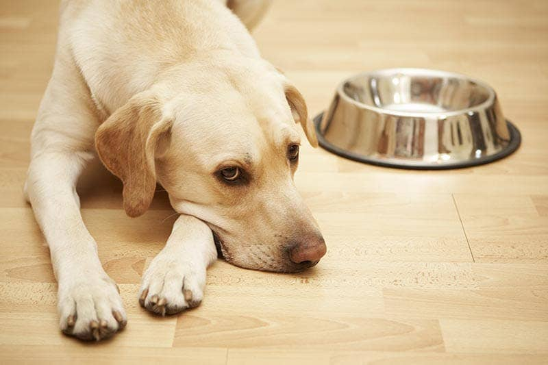 A dog lays next to its bowl