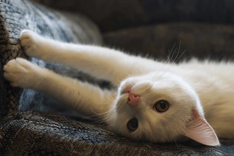 cats-knead