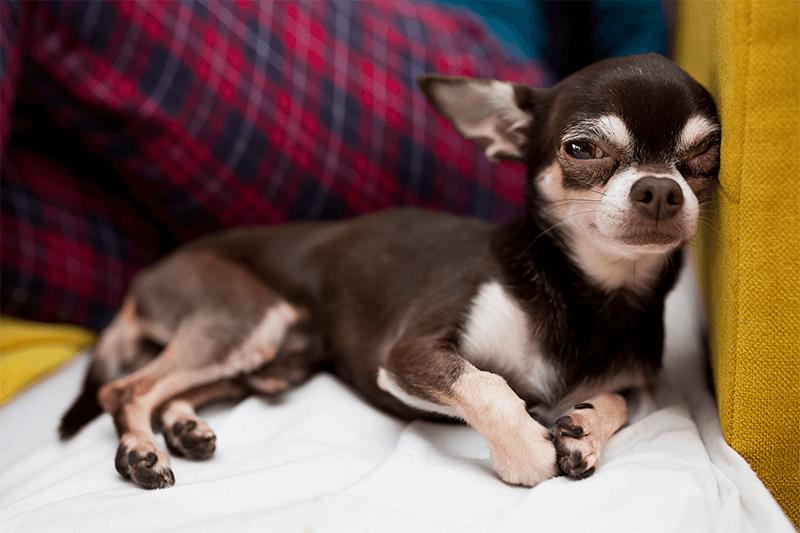 Depressed pup