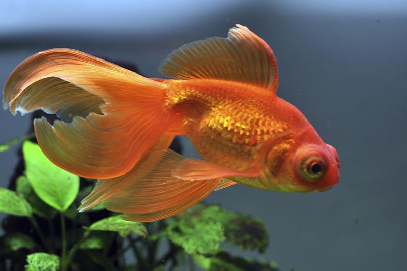 Can Anyone Get A Pet Fish Petbarn