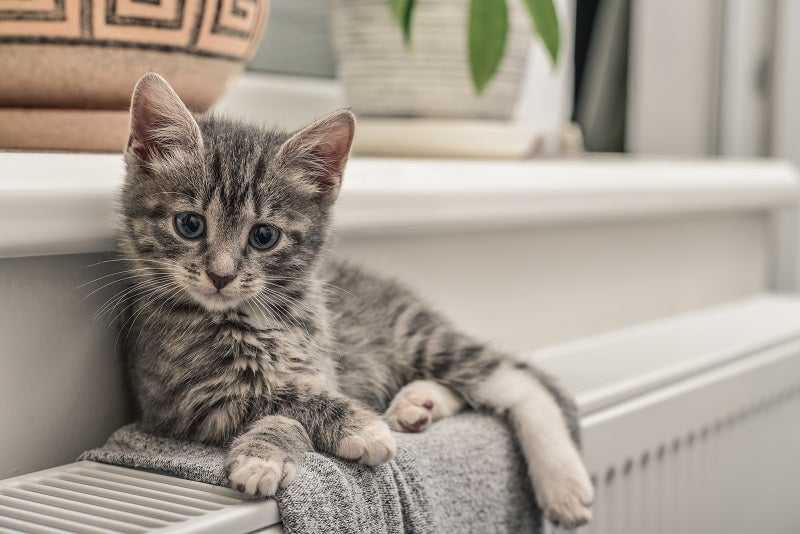 Things to do before bringing your kitten home