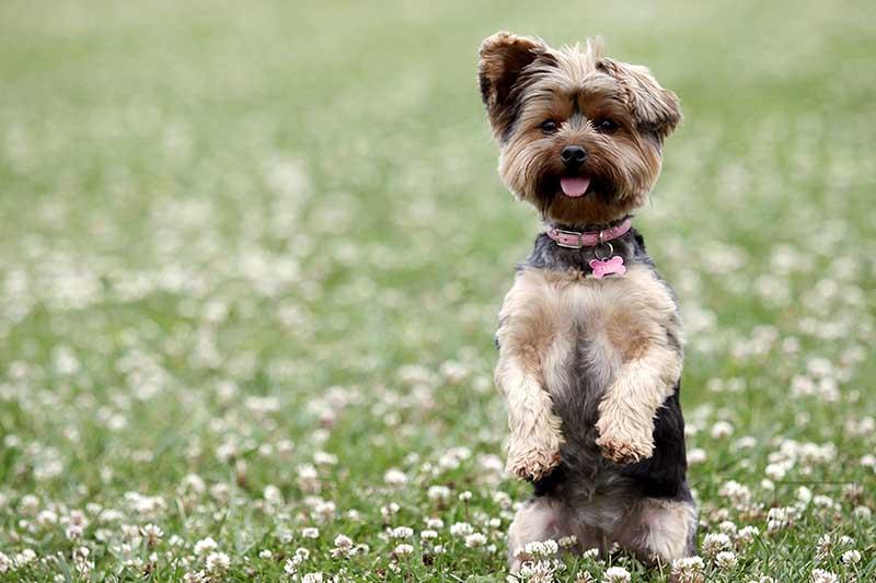 Hasil gambar untuk dog tricks