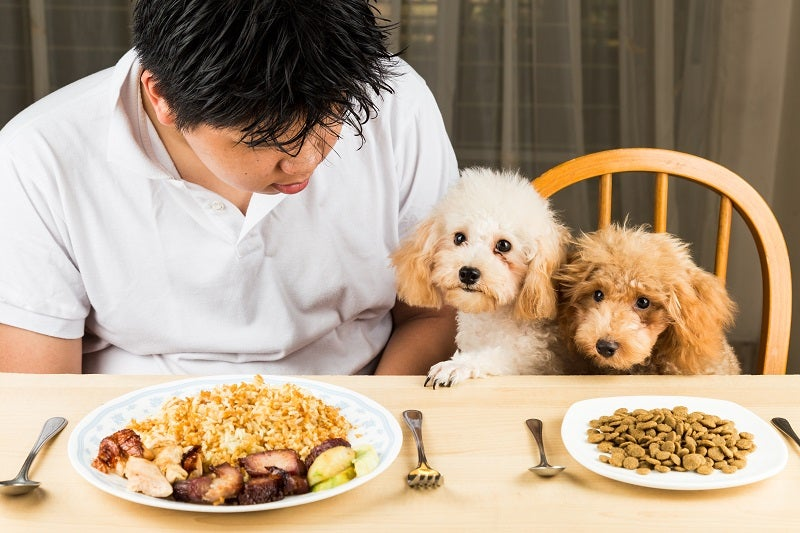What your dog can't eat
