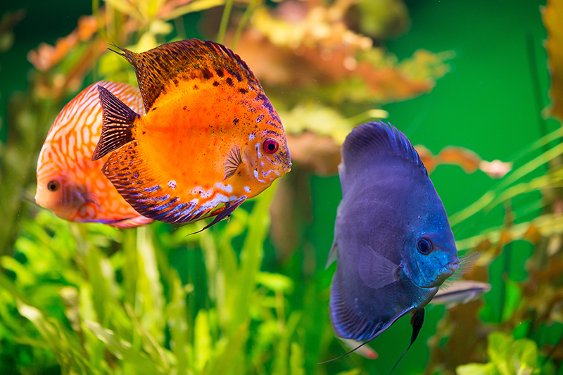 How to care for and feed fish while on holiday