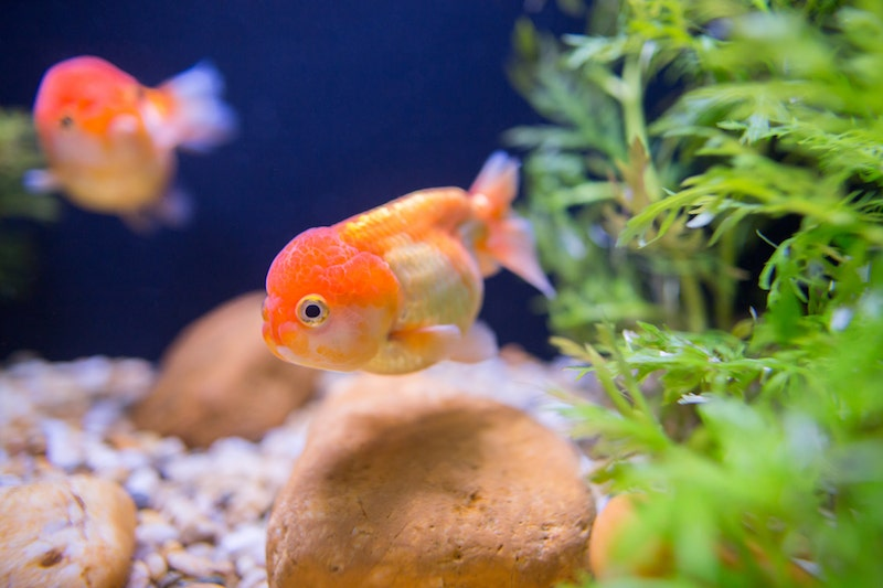 Common Fish Diseases: How To Avoid Them | Petbarn
