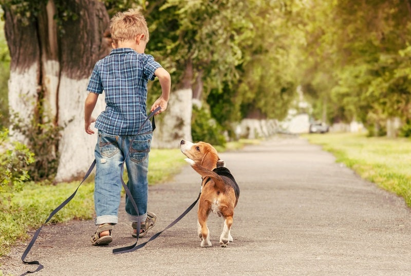 How pets boost your mental and physical health