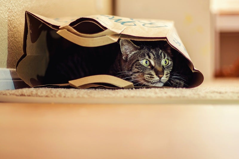 Boredom busters for your cat