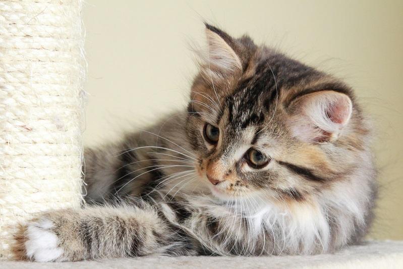 Your essential kitten checklist