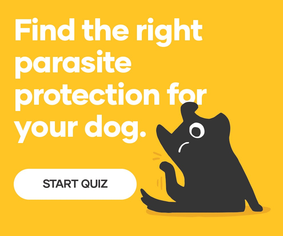 Try our Dog Flea, Tick and Worm Treatment Finder