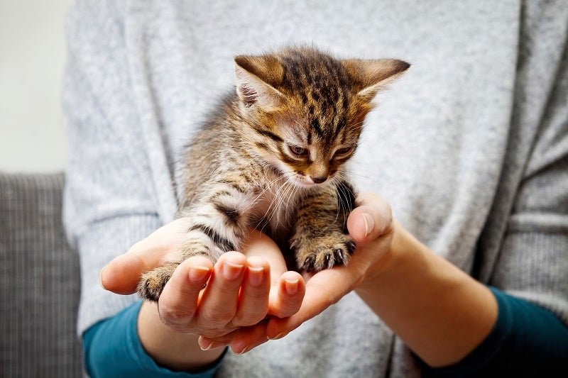Your kitten's parasite prevention program