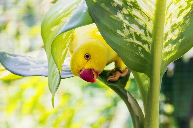 Caring for your bird in the summer