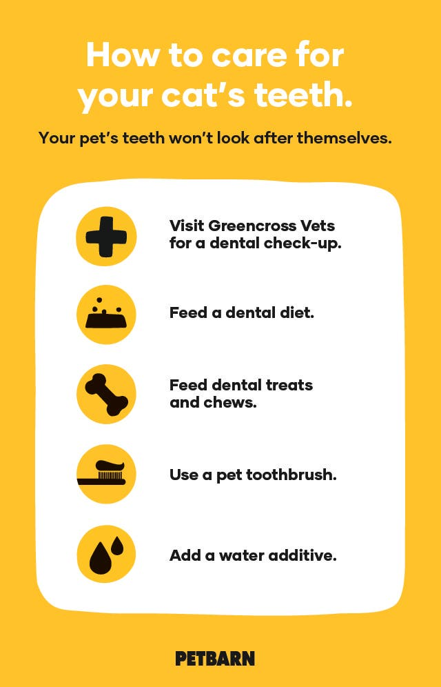 How to clean your cat's teeth