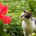 Understanding cat poo colours