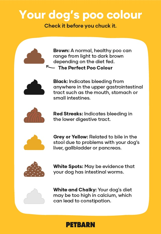 Stupendous Dog Poo Chart What The Colour Is Telling You Petbarn Spiritservingveterans Wood Chair Design Ideas Spiritservingveteransorg