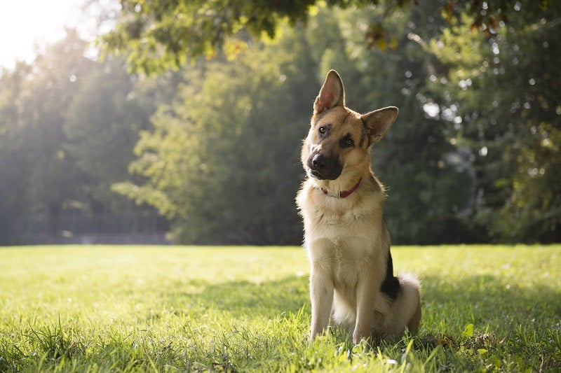 How To Tell If It's A Healthy Dog Poo | Petbarn