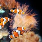 Saltwater fish care/Marine fish care