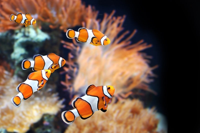 Saltwater fish care/Marine fish care