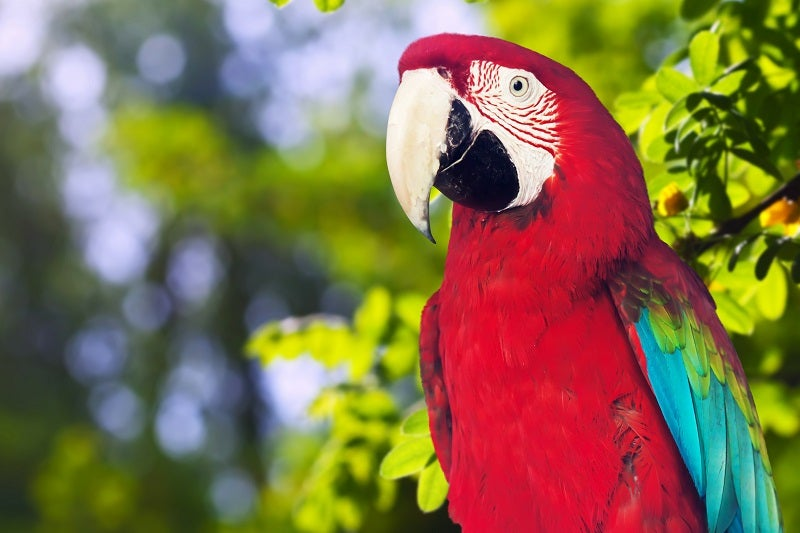 Pet parrot care guide: What do parrots eat and more