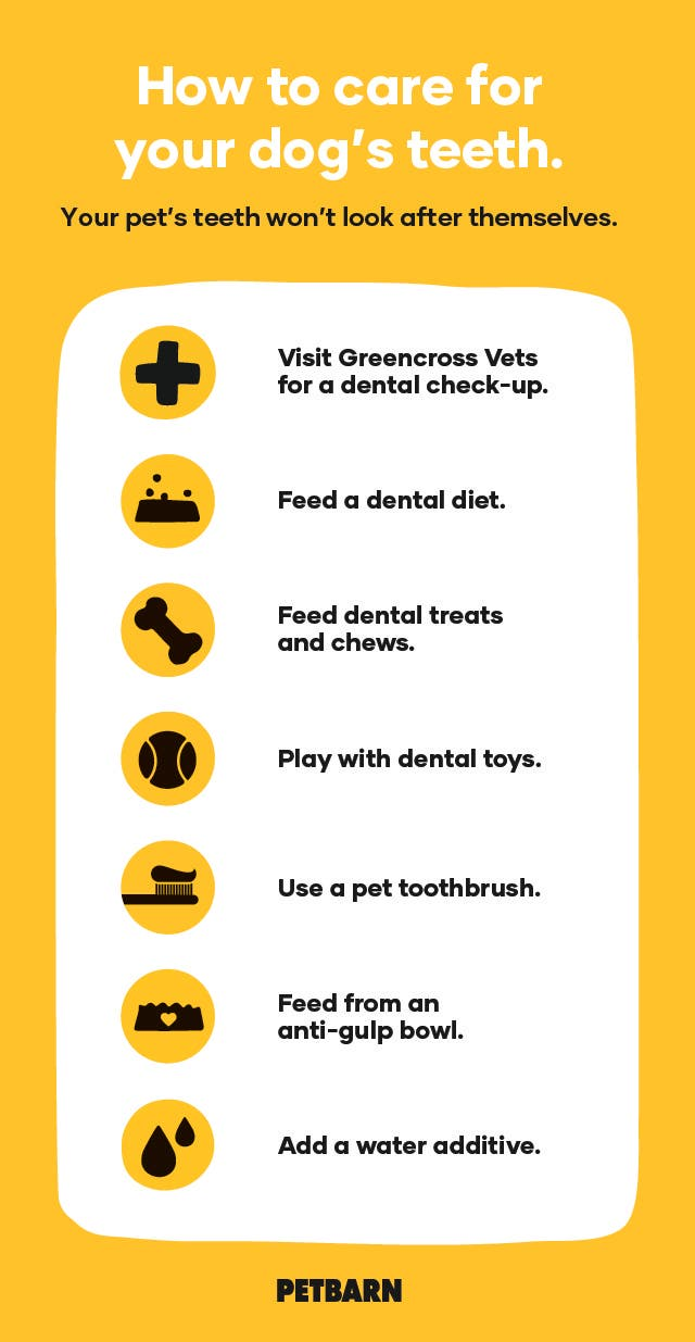 How to clean your dog's teeth at home