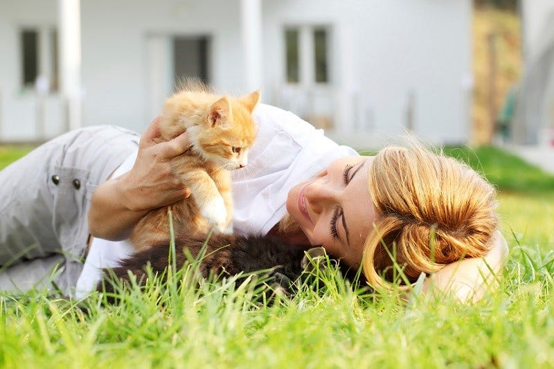 Heartworm in cats