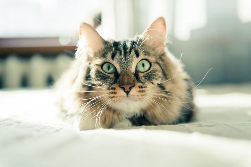 cat parasite myths