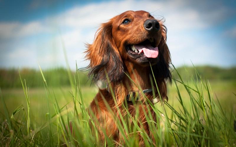 Dog parasite myths busted