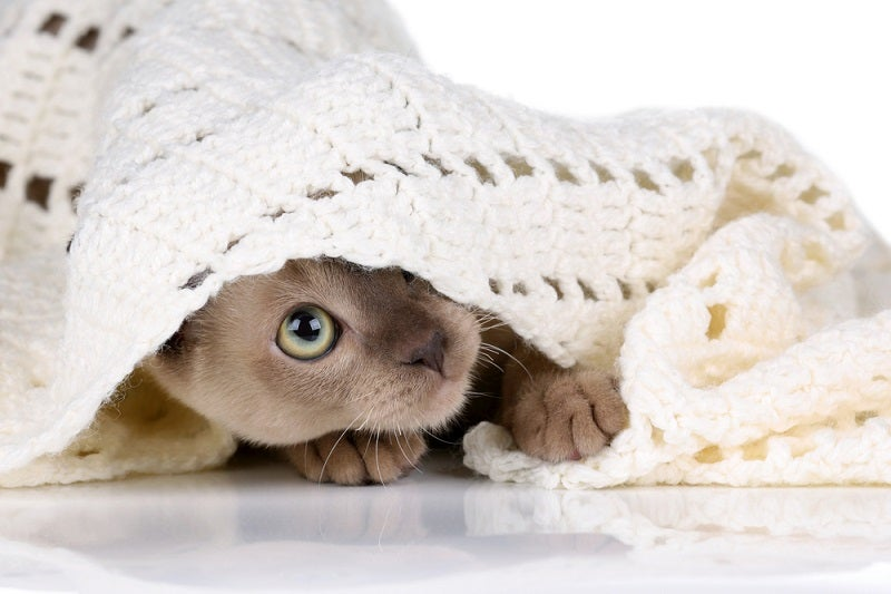 Kitten proofing your home