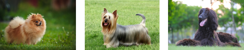 How to groom long haired dogs