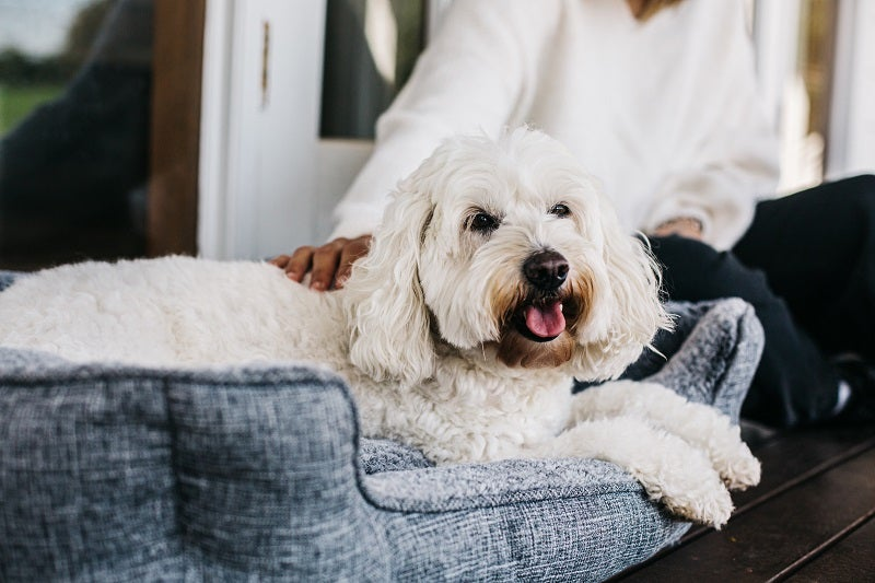 How to choose the best dog bed